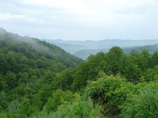обои Зеленые леса на склонаx фото