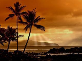 обои Красный закат и пальмы на берегy фото
