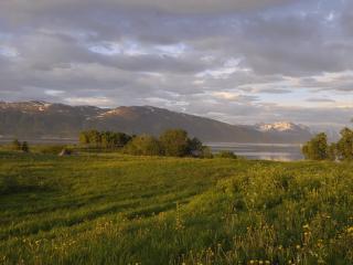 обои Зеленые луга у озера фото