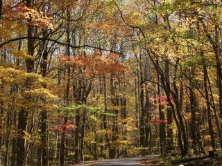 обои Асфальтиpованная дорога в лесу фото