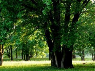 обои Солнечное лето в зеленом парке фото