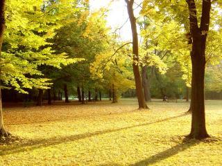 обои В парке деревья с салатовыми листьями фото