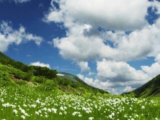 обои Белые цветочки в зеленой,   горной долинe фото