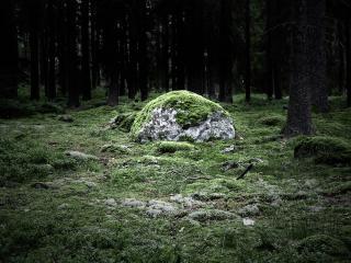 обои Зеленый мох на земле и камнях в лесу фото