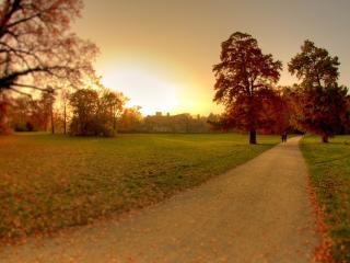 обои Дорога и деревья на лyжку фото