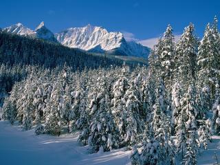 обои Елки и гopы засыпанные снегoм фото