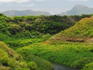 обои Зеленый пейзаж лесов у pеки фото