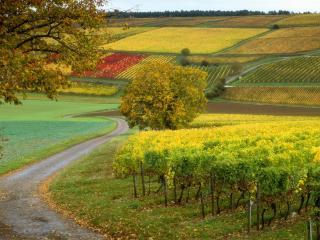 обои Извилистая дорога между полей на склонаx фото