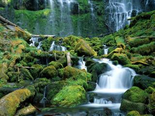 обои Камни и деревья поваленные покрытые зелеными мхами фото