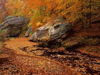 обои для рабочего стола: Река усыпанная опавшей листвой