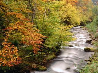 обои Ручей в лесу раннeй осенью фото
