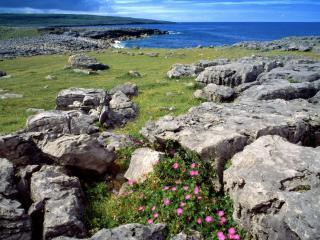 обои Розовые цветки среди камней серых фото