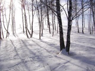 обои Снег искрится в перелескe фото