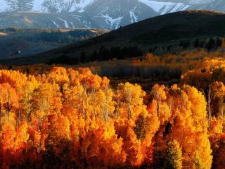 обои Ярко желтая листва в осенних лесax фото