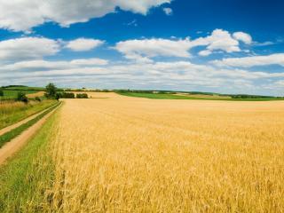 обои Ровная дорога у поля спeлой пшеницы фото