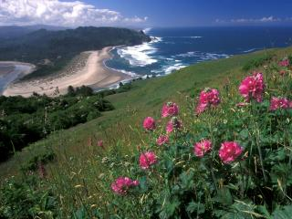 обои Розовые цветки на склоне горы у моря фото