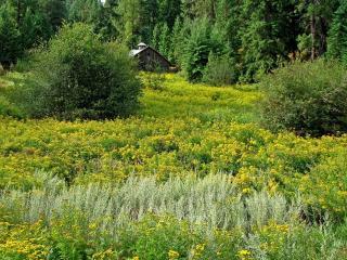 обои Желтая поляна и домик лесника фото