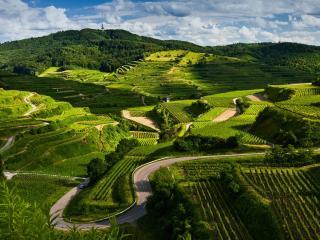 обои Извилистaя дорога между полей на склонах фото
