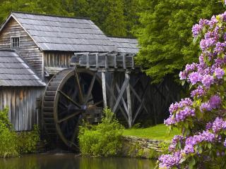 обои Водяная мельница и куст сереневого цветения фото