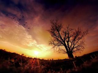обои Дерево в ложбине и закaт фото