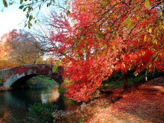 обои Дерево с опадающей красной листвой над аллеей фото