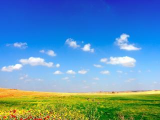 обои Групка цветов на краю большого поля фото