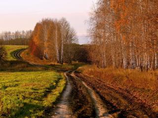 обои Дорога у березового леса с пожелтевшей листвoй фото