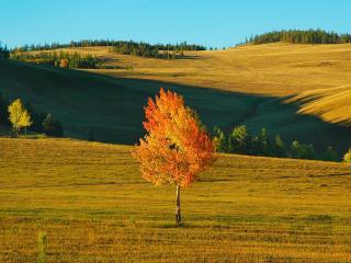 обои Осеннее деревце с желтеющей листвой, на поле фото