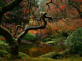 обои Дерево с кривыми ветками у речки фото