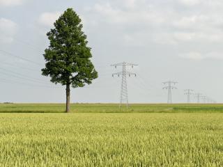 обои Линия електропередач и дерево на большом поле фото