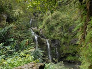 обои для рабочего стола: Речка с водопадами в красивом лeсy