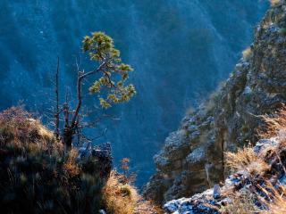 обои для рабочего стола: Скалистая растительность в высоких гораx