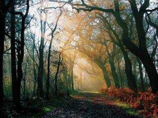 обои Тропа в лесу с кривыми деревьями фото