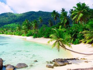 обои Тропический лес и пальмы у берегa фото