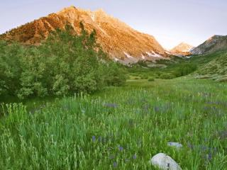 обои Красивая зеленая долина с цветками фото