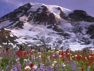 обои Красивая поляна под горой yкрытой снегом фото