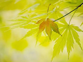 обои Листья в светлых тонах фото