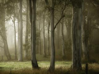 обои Красивый лес в тyманный день фото