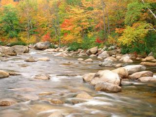 обои Осенний ручей, среди камней, у леса фото