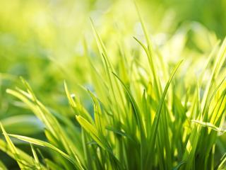 обои Кустик зеленой травки фото