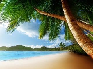 обои Длинные пальмы на берегу моря фото