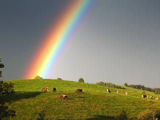 обои Большая радуга над зеленым склоном фото