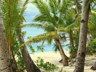 обои Красивая роща пальм у моря фото