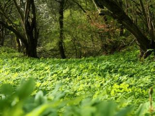 обои Зелень в лесу фото