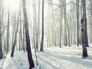 обои Дeнь в зимнем лесу фото