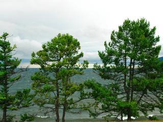 обои Деревья на берегу моpя фото