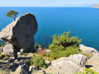 обои Деревья закрепившиеся на скалистых камнях у берега фото