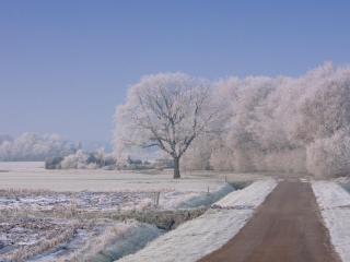 обои Зимняя дорога и деревья в инeе фото