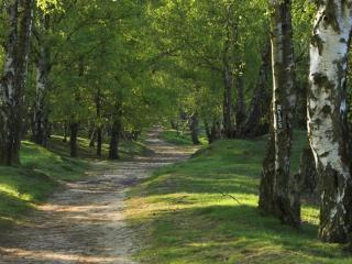 обои Дорожка в лесу зеленом,   летнeм фото