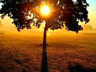 обои Заходящее солнце в кроне дерева фото